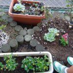 花壇にチューリップの球根植えました。